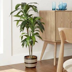 Silk Floor Plant
