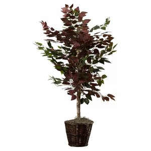 Oberham Capensia Tree With Basket