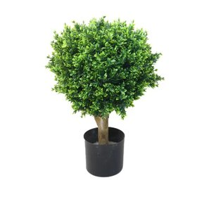 Hedyotis Boxwood Topiary Pot (Set of 2)