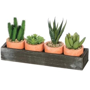 Cactus Desktop Plant With Tray (Set of 4)