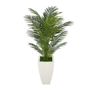 Areca Palm Tree In White Planter