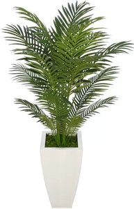 Areca Palm Tree With Planter White And Green