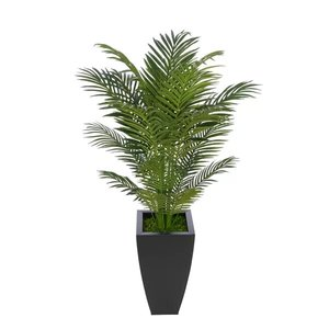 Areca Palm Tree In Black Planter
