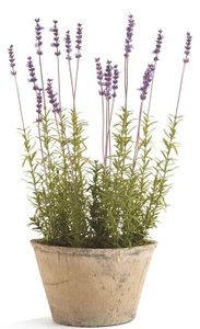 French Floral Pot Lavender And Brown