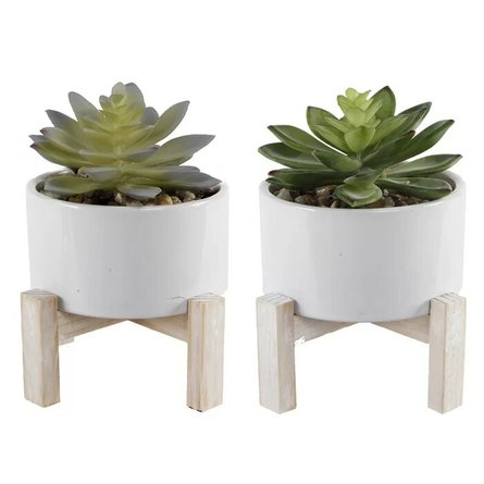 Succulent Plant With Pot White (Set of 2)