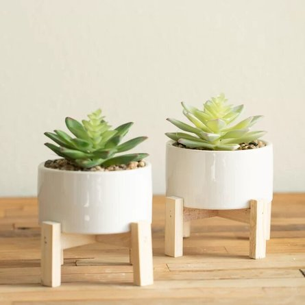Succulent Plant With Pot White (Set of 2)