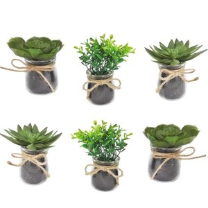 Boxwood Succulent Plant With Jar (Set of 6)